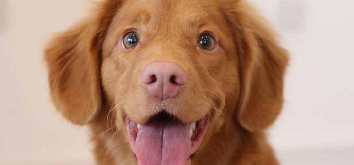 จะเลือกสุนัขมาเลี้ยงสักตัวต้องสังเกตอะไรบ้าง